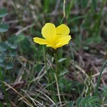 Flora fauna photos aus europas pflanzen und tierwelt flora fauna